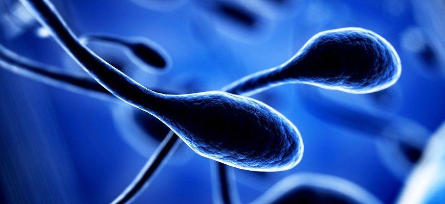 ishu-donora-spermi-barnaul